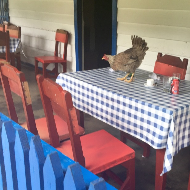 Fresh chicken on the table